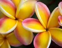 Hawaii - Flora