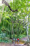 The hike in through the jungle at Honolua Bay on the island of Maui, Lahaina, HI, USA