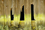Barn siding with gaps and green algae.