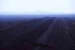 Hatfield  peat moor.  Industrial  extraction by Levingtons  for garden peat  has left the place a barren deserted desert.