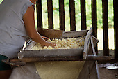 Belterra, Amazon, Brazil. Woman in a Casa de Mandioca grating manioc (cassava) roots. Para State.
