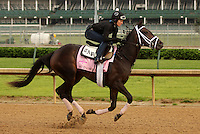 LOUISVILLE, KY - APRIL 27:  Mo d'Amour (Uncle Mo x Neverthesame, by Scat Daddy) gallops with braided mane with exercise rider Amy Mullen at Churchill Downs, Louisville, KY. Owner King of Prussia Stable, trainer Todd A. Pletcher. (Photo by Mary M. Meek/Eclipse Sportswire/Getty Images)