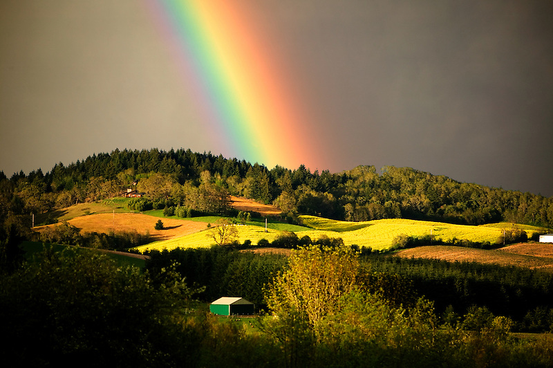"Barn, mustard field, and rainbow. Near Alpine Oregon. This is a photo illustration. The rainbow has been digitally added to the photo. Please indicate ""Photo Illustration"" when publishing."