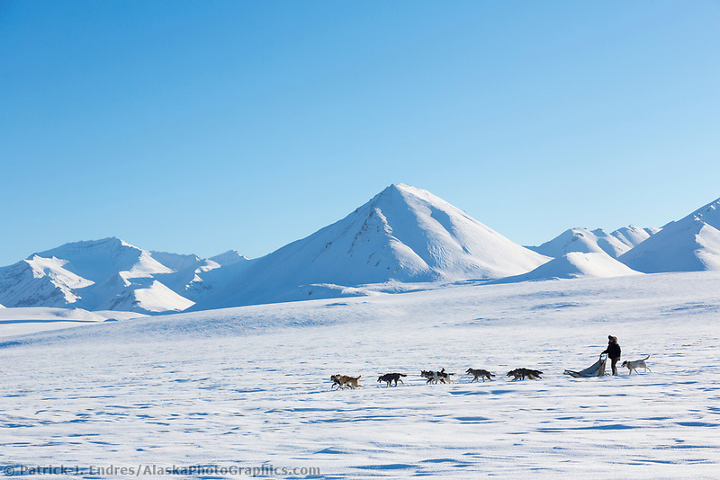 Sled dog team traverses the tundra on the north side of the Brooks Range mountains, Arctic, Alaska.
