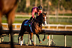 OCT 28: Breeders' Cup Juvenile Turf entrant Graceful Kitten, trained by Amador Merei Sanchez, at Santa Anita Park in Arcadia, California on Oct 28, 2019. Evers/Eclipse Sportswire/Breeders' Cup