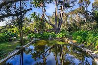 France, Manche (50), Vauville, Jardin botanique du château de Vauville, Jardin de la Sagesse, bassin, eucalyptus et pivoine du Japon en fleurs