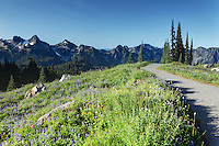 Tatoosh Mountains and trail through subalpine wildflower meadow, Paradise, Mount Rainier National Park, Washington