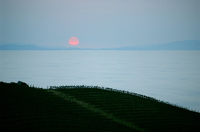 Sunrise on Cain Vineyard on Spring Mountain