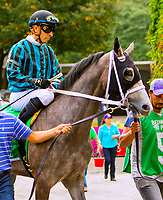 OCTOBER 7, 2018 : Bizzee Channel in the Futurity Stakes at Belmont Park on October 6, 2018 in Elmont, NY.  Sue Kawczynski/ESW/CSM