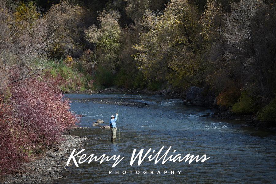 Fly Fisherman, Provo River, Autumn Fall Colors, Utah, USA.