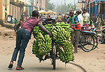 Pictured: Transporting bananas to market on a bike.<br /> <br /> Goods as varied as mattresses and cabbages are precariously balanced on bikes and hauled enormous distances to be sold at market stalls.  A series of photos show workers in the Democratic Republic of Congo and neighbouring Rwanda walking up to 20 miles as they transport their wares from small villages and farms to city marketplaces.<br /> <br /> One shot even shows a man riding a motorbike with seven multi-coloured mattresses tied to the back.  Bicycles laden with sacks bursting full of potatoes will weight more than 30 stones, as workers wheel them from their homes to be sold.  SEE OUR COPY FOR DETAILS.<br /> <br /> <br /> Please byline: Joe Dordo Brnobic/Solent News<br /> <br /> © Joe Dordo Brnobic/Solent News & Photo Agency<br /> UK +44 (0) 2380 458800