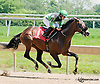 Mineswept winning at Delaware Park on 6/19/13