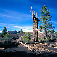 Hardened Lava Flow in Sunset Crater Volcano National Monument, near Flagstaff, Arizona, USA