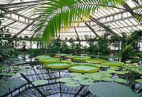 Belgium, Flanders, Flemish Brabant, Meise: Greenhouse at National Botanical Gardens | Belgien, Flandern, Flaemisch-Brabant, Meise: Gewaechshaus im botanischen Garten Nationale Plantentuin van België