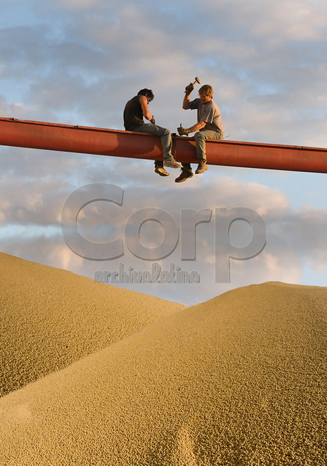 Soja a granel durante la cosecha, Salto, Buenos Aires