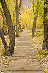 Boardwalk trail around Convict Lake winding through aspen and cottonwood forest, fall, Inyo National Forest, California
