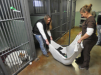 NWA Media/Michael Woods --12/04/2014-- w @NWAMICHAELW...Flippin High School Junior Lilly Fisher (left) helps out Mandy Mattix, veterinarian assistant at All Creatures Veterinary Hospital as they move one of the injured dogs back into a pen after getting his wound treated Thursday afternoon in Mountain Home.<br /> Juniors and seniors on track to graduate from Flippin High School have the option of leaving school early to work, explore careers or take college courses.
