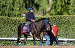 OCT 29: Breeders' Cup Sprint entrant Imperial Hint, trained by Luis Carvajal Jr., at Santa Anita Park in Arcadia, California on Oct 29, 2019. Evers/Eclipse Sportswire/Breeders' Cup