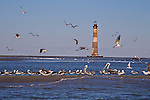 Morris Island Lighthouse with seabirds