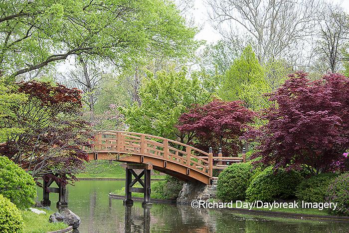 65021-03803 Japanese Garden in spring,  Missouri Botanical Garden, St Louis, MO