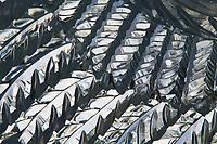 Ice Sculpture by Junichi Nakamura. Single Block 2003 World Ice Art Championships, Fairbanks Alaska.