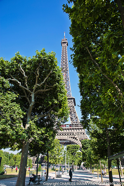 The  Eiffel Tower looms over an allee of sycamore trees in Paris.