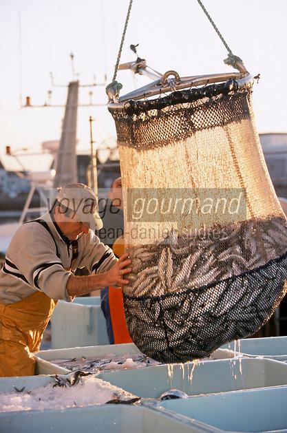 Europe/France/Bretagne/29/Finistère/Saint Guénolé: Retour des sardiniers au port à l'aube - déchargement des bateaux avec la salabarde détail