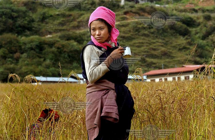 Women harvest rice in the fields of Karmeling Hotel owner Richin Wangmo in Trashi Yangtse village in Eastern Bhutan.
