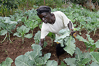 KENYA, Kaimosi, NGO RSP Rural Service Programme promote farming of traditional crops and crop diversity for healthy nutrition amongst small scale farmers, different local vegetables / KENIA Kisumu County, Kaimosi, NGO RSP Rural Service Programme, Unterstuetzung von Kleinbauern beim biologischen Anbau von traditionellen Sorten, Sortenvielfalt und Verbesserung einer gesunden Ernaehrung, Dorf Museywa, Sortenvielfalt, verschiedene traditionelle Gemuesesorten, Frau Gladys Nyagoha, 59 Jahre, im Feld mit Blattkohl Zukuma