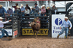 Davis Rodeo 4611 of Davis Rodeo Ranch/ C & S Cattle during the American Bucking Bull, Incorporated event in Decatur, TX - 6.3.2016. Photo by Christopher Thompson