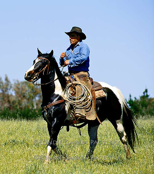 Cowboy riding his paint horse. (Ron Garcia)