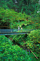 Visitors to Akaka Falls State Park walk thru the scenic 66 acre lush rainforest on  a paved path.