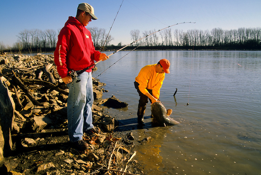 Anglers landing trophy blue catfish while fishing beside wing dike on the Missouri River near Glasgow, Missouri