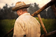 An olive farmer carrying his ladder through the olive fields of Tuscany Italy.