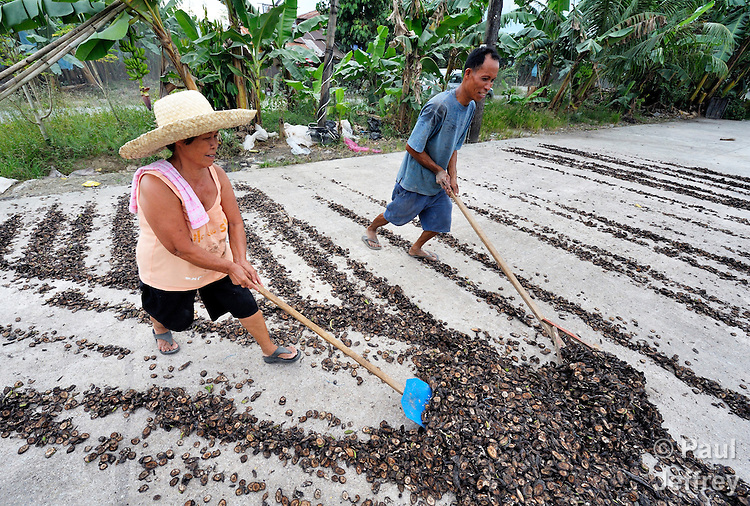 A woman and man turn banana pieces in a drying yard in the village of Baclog in the Compostela Valley on Mindanao Island in the southern Philippines. The dried banana pieces are turned into animal feed.