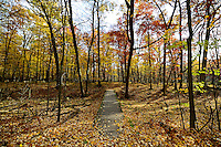 Oak Openings Preserve in Swanton, Ohio.