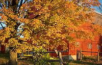 Fall Foliage in Grand Isle, VT part of the Lake Champlain Islands.