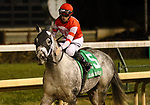 November 23, 2018 : Leofric (jockey Florent Geroux, #5) wins the 144th running of the G1 Clark Handicap at Churchill Downs, Louisville, Kentucky. Owner Steve Landers Racing LLC (Steve Landers), trainer Brad H. Cox. By Candy Ride x Lady Godiva, by Unbridled's Song. Second place was Bravazo (#6, jockey Joel Rosario.) Mary M. Meek/ESW/CSM