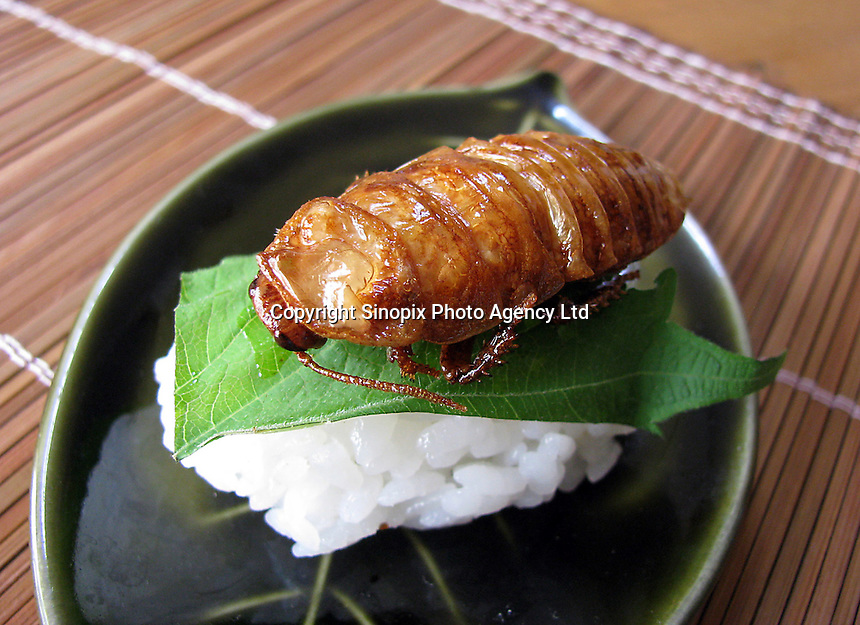 White madagasgar cockroach sushi at a big eating party in Tokyo, Japan. The bug eating movement is gaining in popularity in Japan where bug eating gourmet cooking parties are sold-out.  The insects are seen as the ultimate challenge in the world's gastronomical capitol but alo seen as an important alternative source of protein for the future and even the Japanese Space Program is looking intot eh use of using insects as food in space travel.