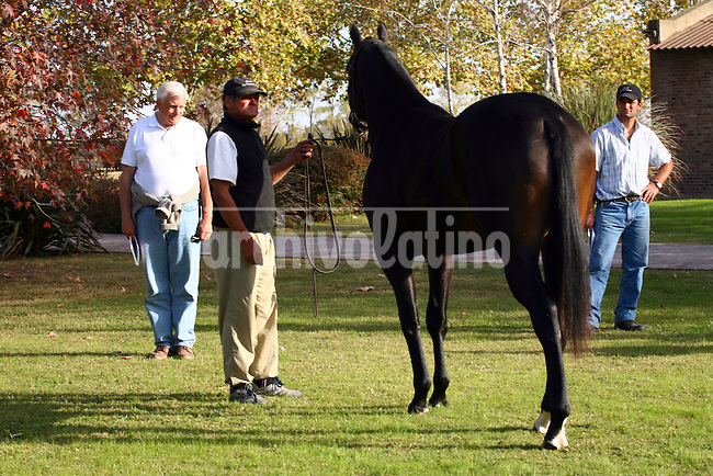 American billionaire  Jess Jackson observes different horses in farms near San Antonio de Areco, NBuenos Aires province, before buying any of them.