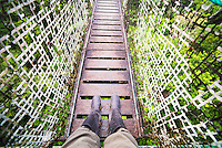 Amazon Rainforest Canopy Walk at Sacha Lodge, Coca, Ecuador, South America