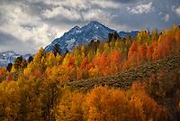 Autumn Fire. Teton Range, Wyoming. September
