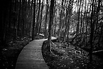 Wooden path snakes through trees, winter, stark branches, dark light