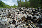 Ancient Glacial Geological Landslide showing bolders with various moss and lichens growing, near Hiidenportti National Park, Finland, in Sotkamo in the Kainuu region
