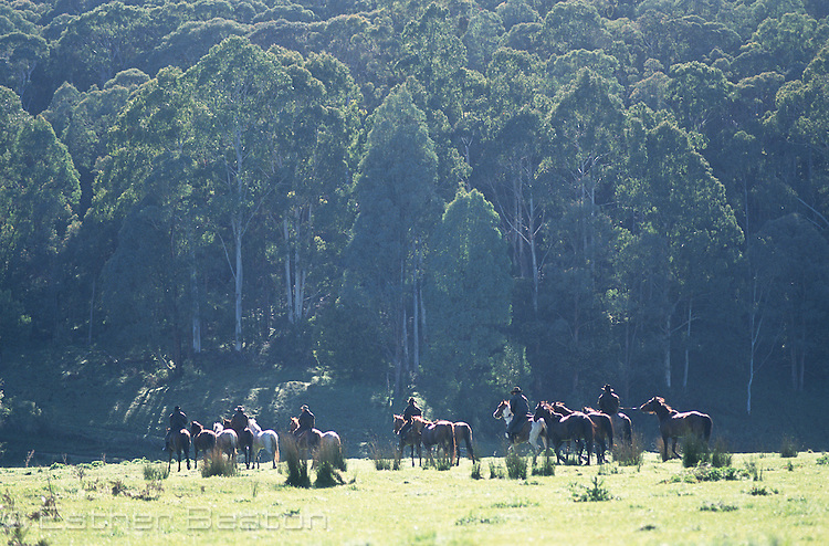 Stockman and horses in high country mountain meadow. Snowy Mountains, Victoria