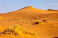 Merzouga, Morocco.  Sand Dune and Desert Vegetation.
