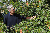 Europe/France/Normandie/Basse-Normandie/50/Saint-Jean-des-Champs: Ferme de l´Hermitière<br /> Jean Luc Coulombier dans ses vergers de pommiers<br /> Àuto N°:  2012-442<br /> // Europe,France,Normandie,Basse-Normandie,Saint-Jean-des-Champs:  Jean Luc Coulombier in apple orchards - Ferme de l´Hermitière