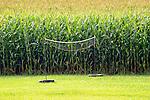 Badminton net and corn field.