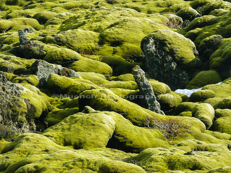Icelandic moss and lava flows,Katla Geopark,Iceland