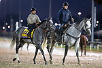 November 1, 2018: Pavel, trained by Doug F. O'Neill, exercises in preparation for the Breeders' Cup Classic at Churchill Downs on November 1, 2018 in Louisville, Kentucky. Alex Evers/Eclipse Sportswire/CSM